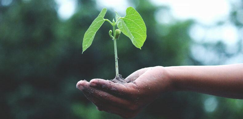 Sustainable Marketing. Nachhaltigkeit in Unternehmen ist unserer Zukunft. Denn ist die einzige, die wir haben.